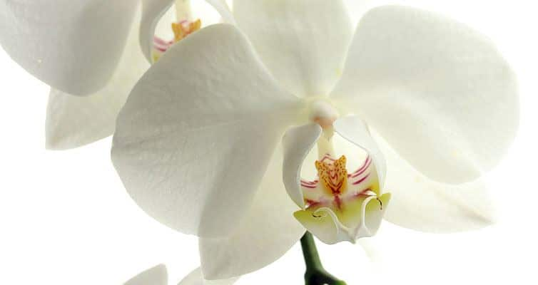 bouquet-fleurs-decoration